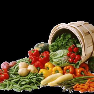 Verduras y Hortalizas Bio/Eco